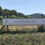 Veloreise an der Toskana Küste 5